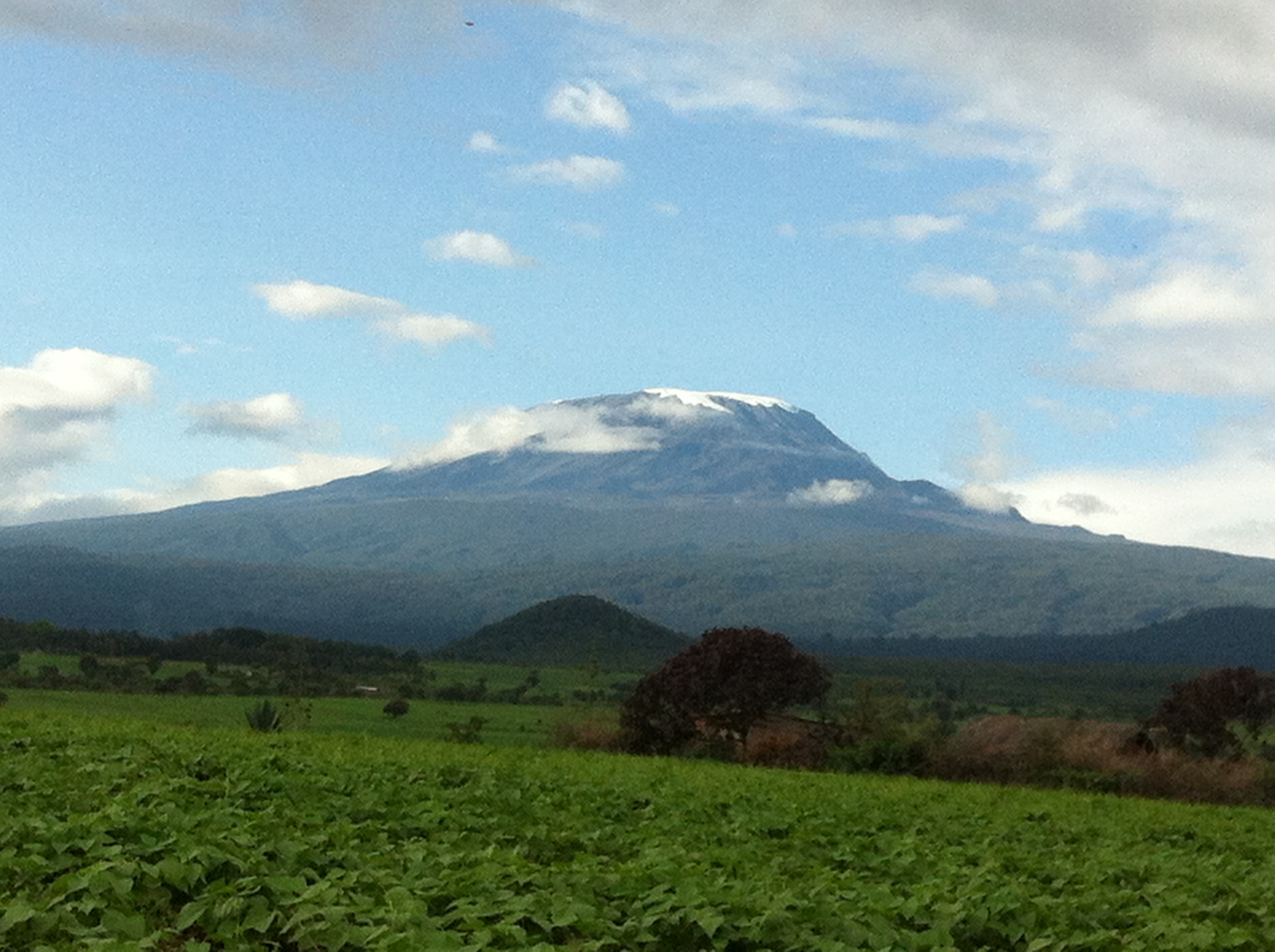 tip of mount Kilimanjaro, shot from the ground on a rare clear-sky day